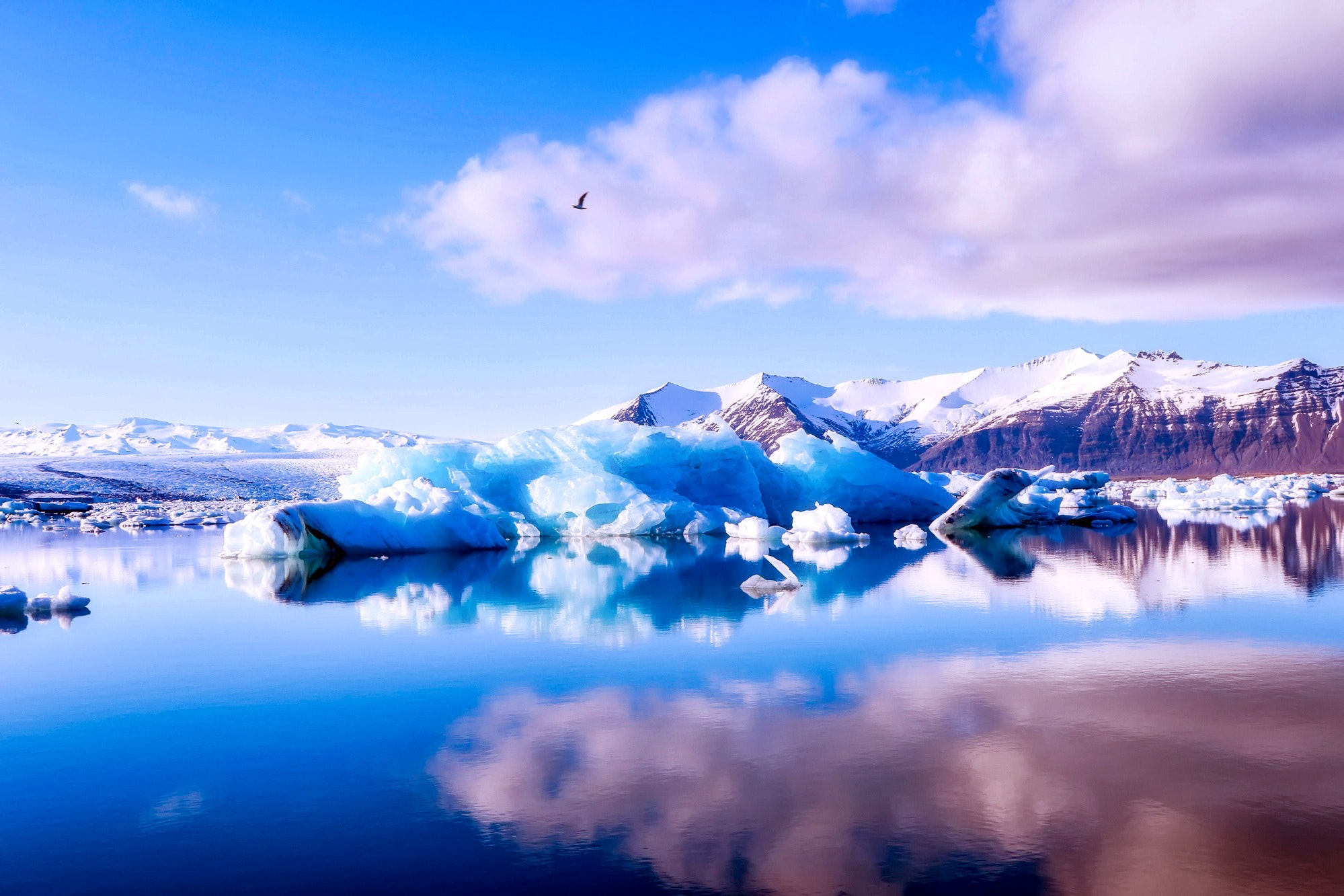 bird-clouds-cold-414101.jpg