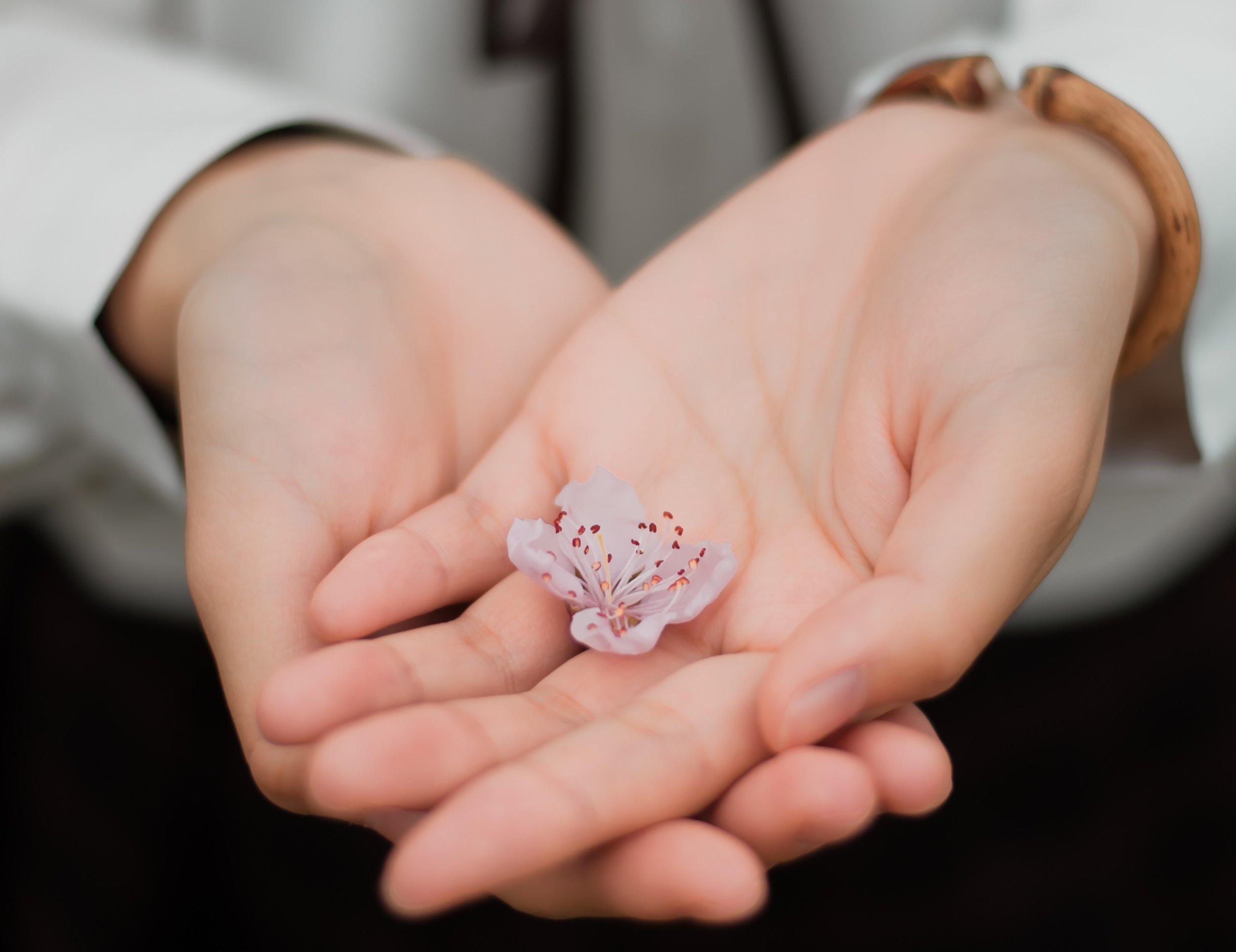 blur-close-up-flower-460295.jpg