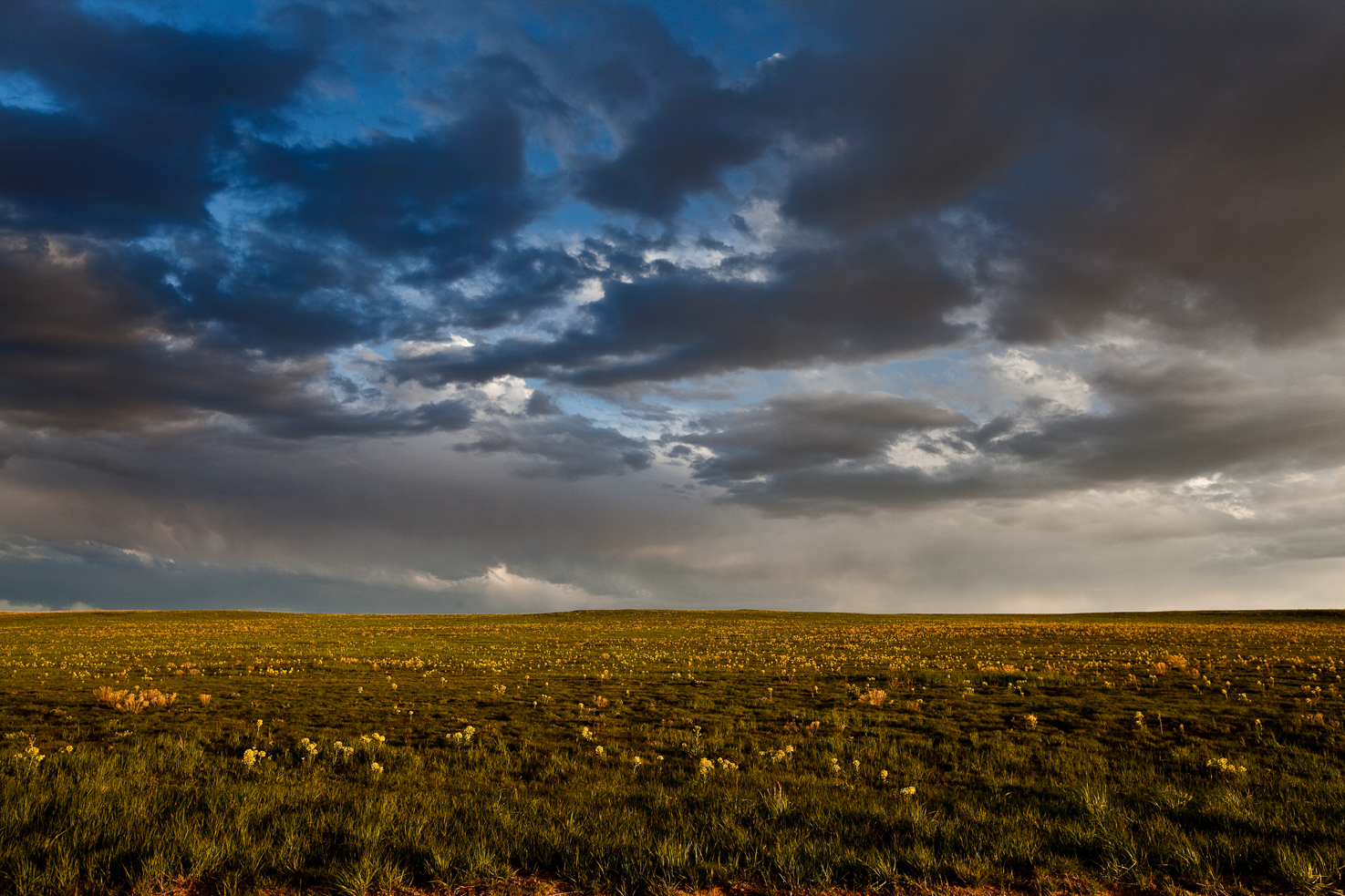 Wildflowers and rain clouds over the Pawnee Grasslands