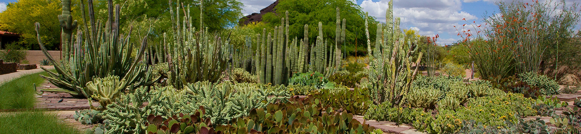 Ottosen Entry Garden at the Desert Botanical Gardens.  Design by Spurlock Poirie r, photograph by Bill Timmerman.