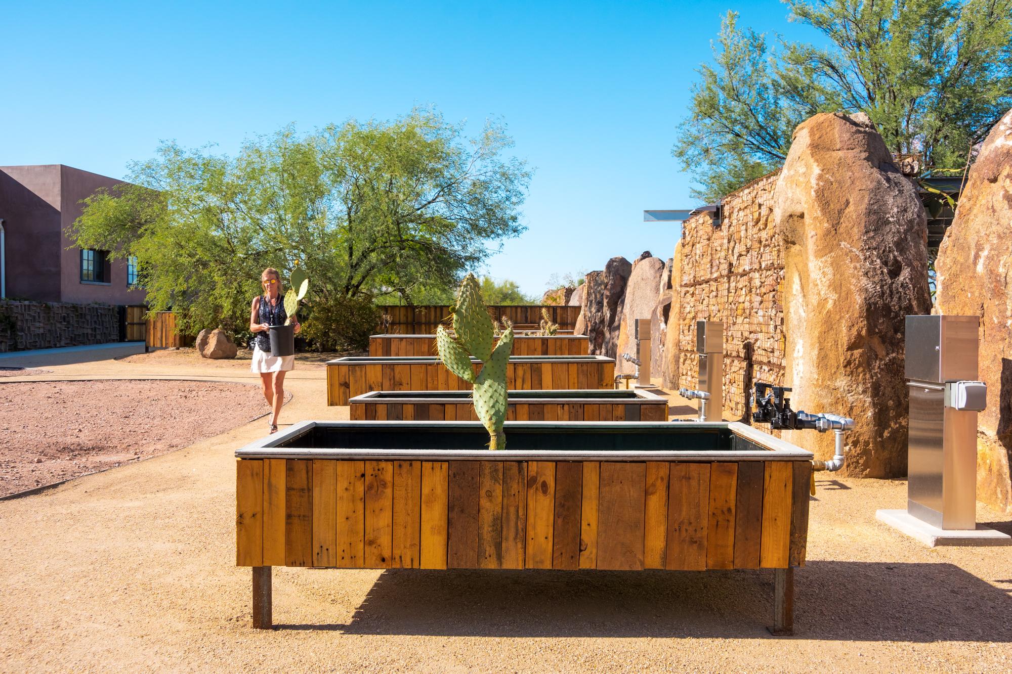 Desert Botanical Garden_An Pham Photography_ArchitectureDesert Botanical Garden_Architecture_An Pham_photography_AN5_7424.jpg