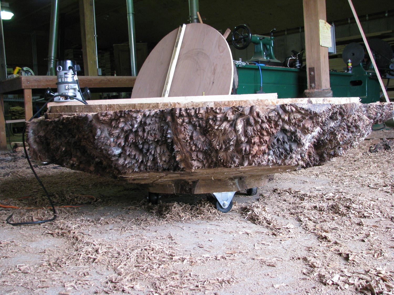 Giant walnut bowl edge with natural surface