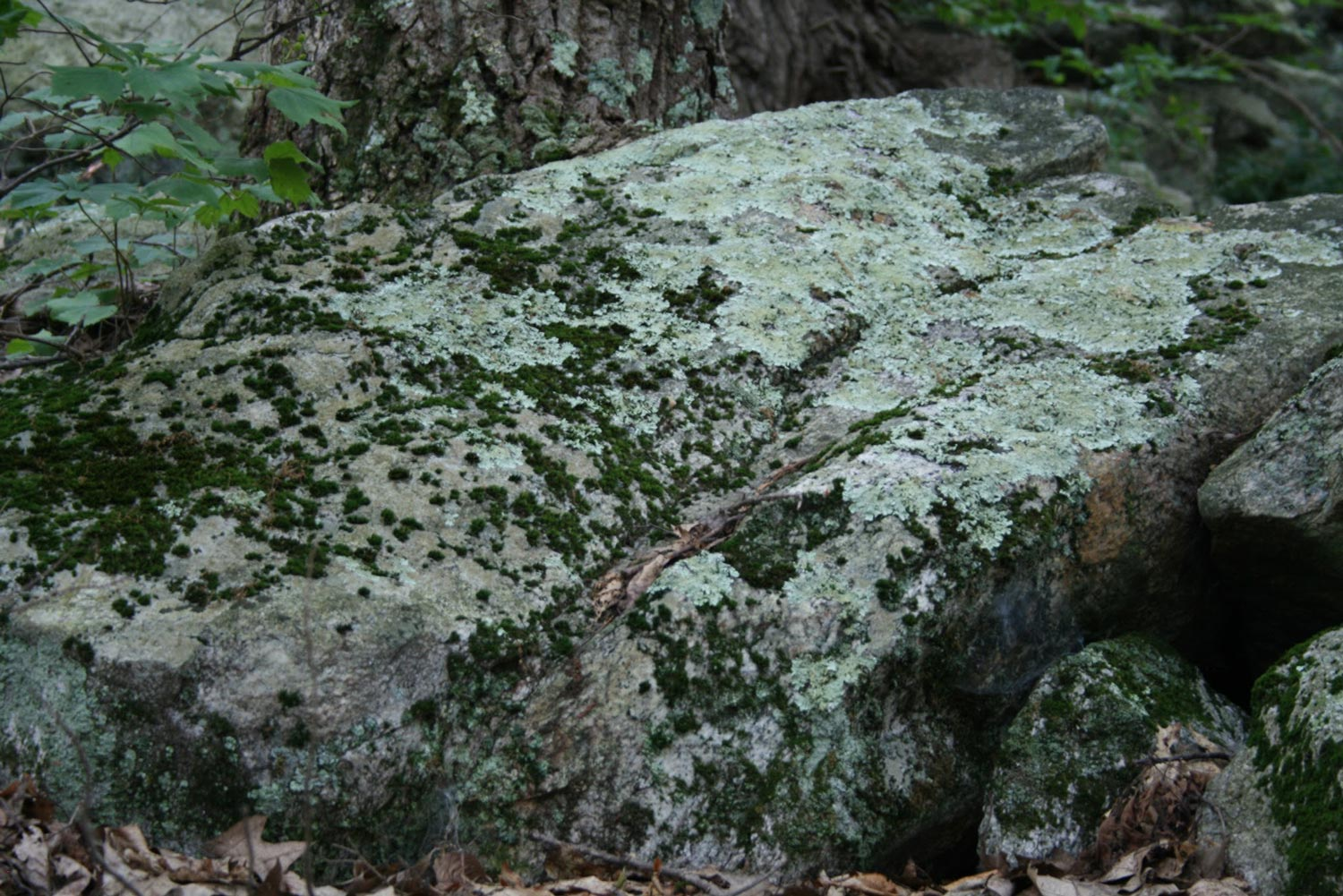 Lichens and moss on granite monoliths