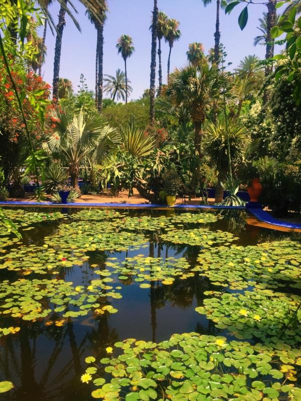 YSL Gardens in Marrakesh