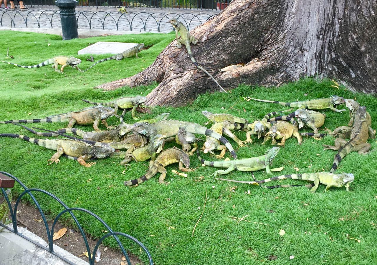 Iguana Park Guayaquil.jpg