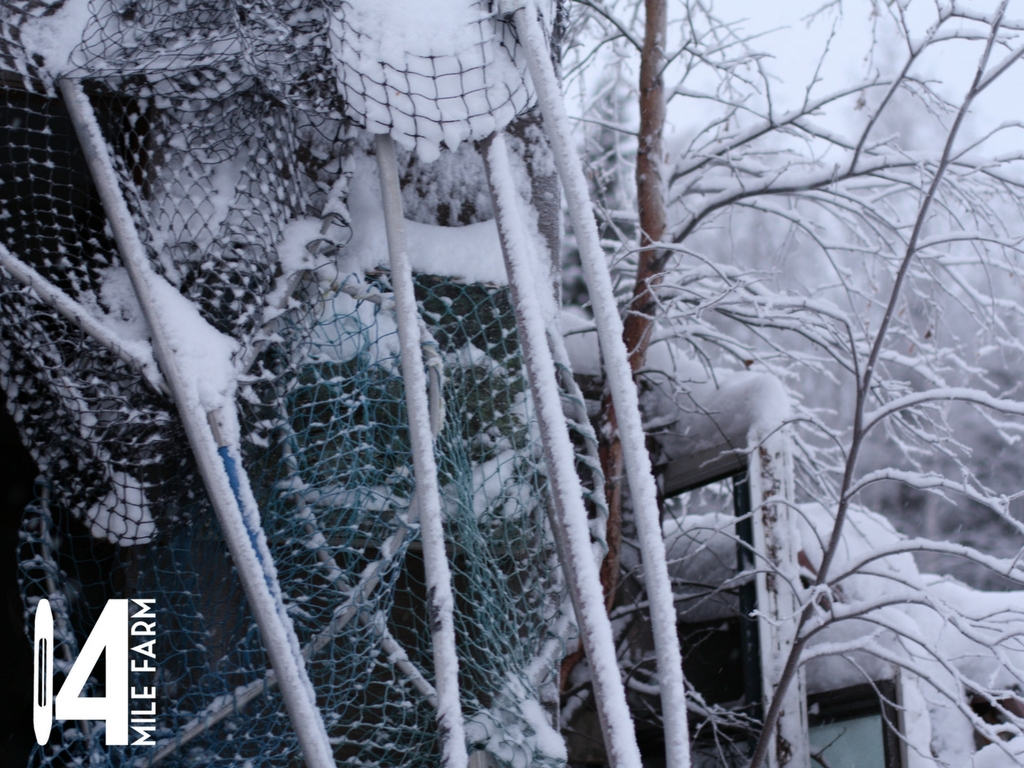 Snow covered dipnets lean against a wood shed next to a snow clad birch tree under a snow white Alaskan sky | 14 Mile Farm Handweaving and Homesteading in Alaska