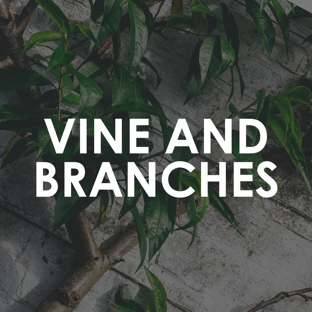 Vine branches.png
