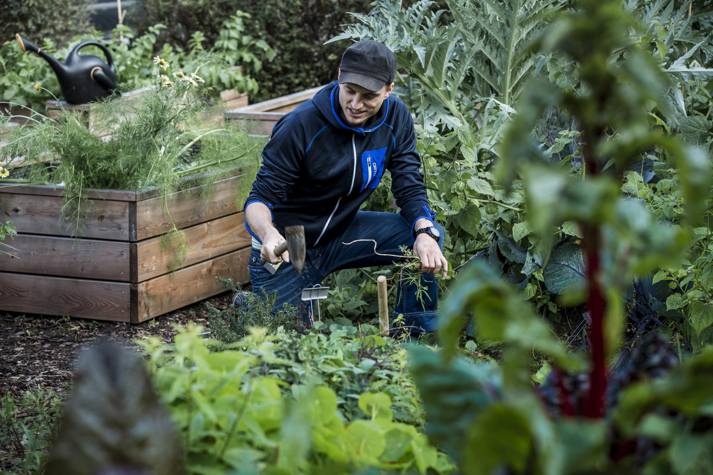 Copien im Kochschulgarten - Garden to Table.jpg