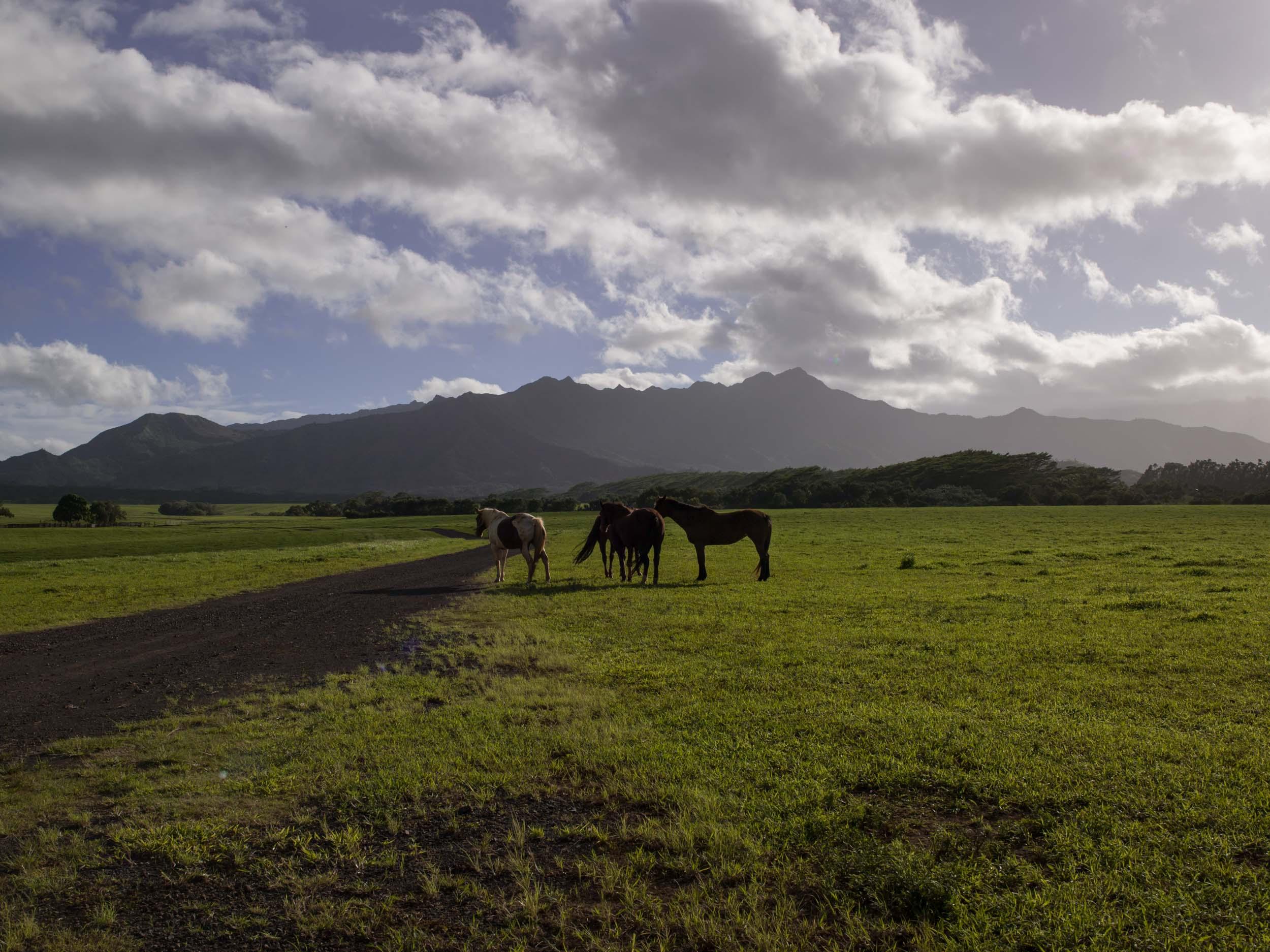 Hawai014.jpg
