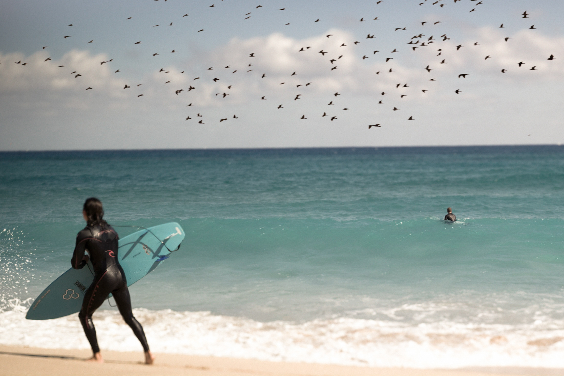Surfing with the birds