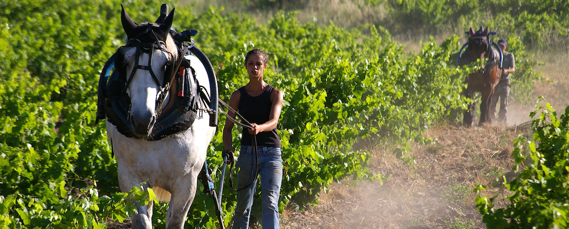Horse power, Languedoc