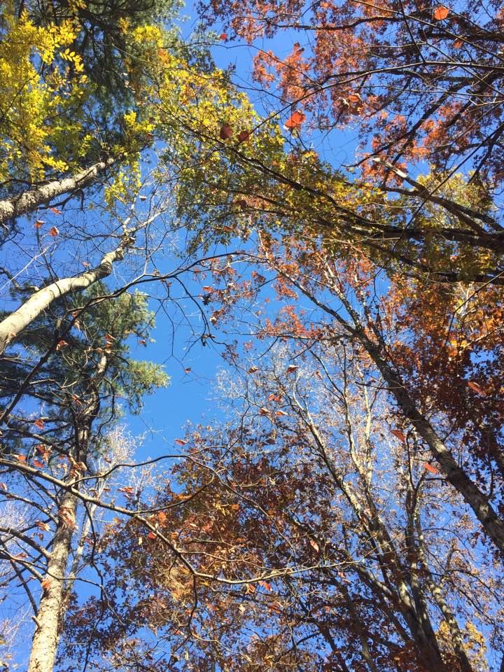 The gorgeous Carolina Blue sky on my walk with Silva-babes!