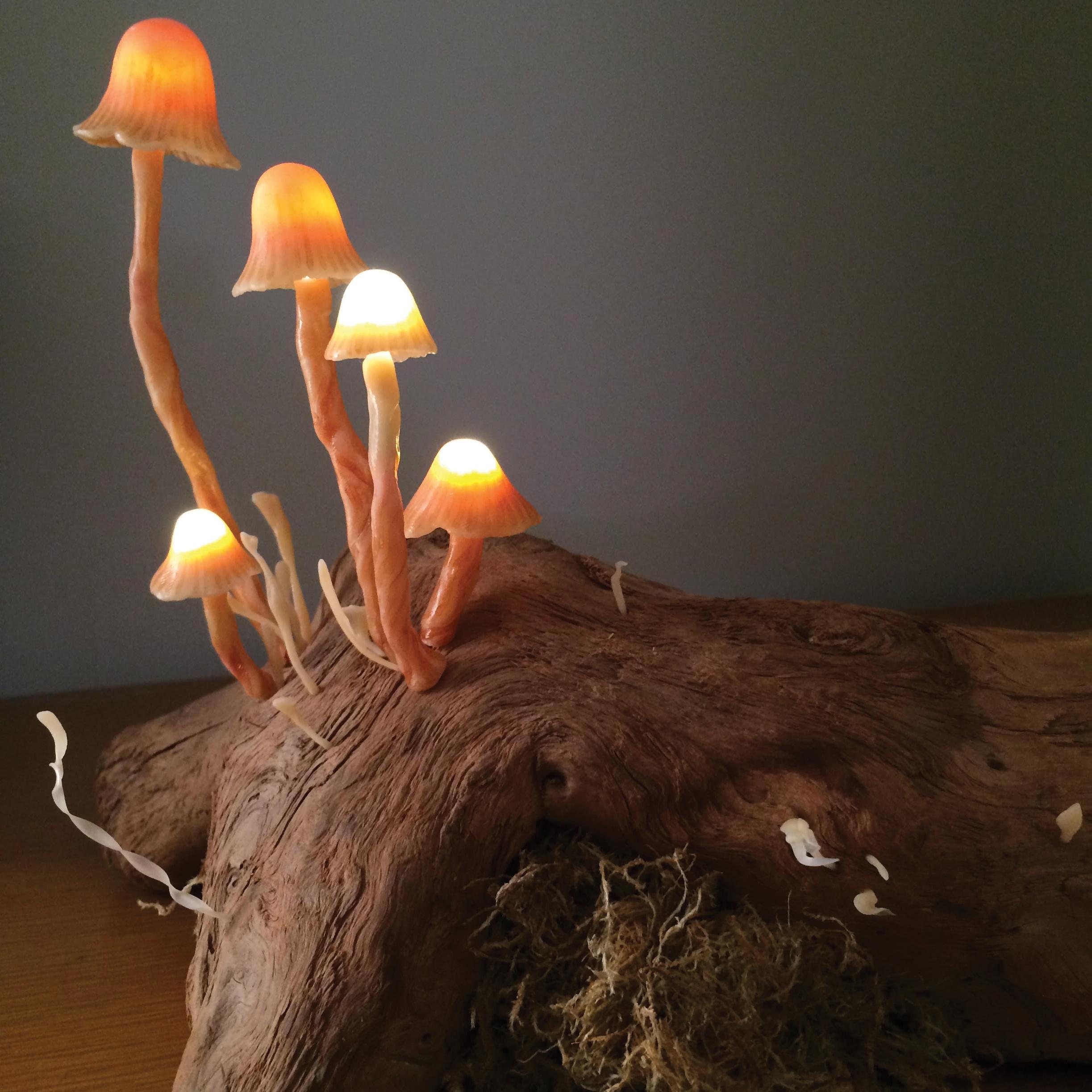 """Untitled (mushroom lamp).  2014 - plastic and LED lights on antique wood. 11"""" x 23"""" x 7""""."""