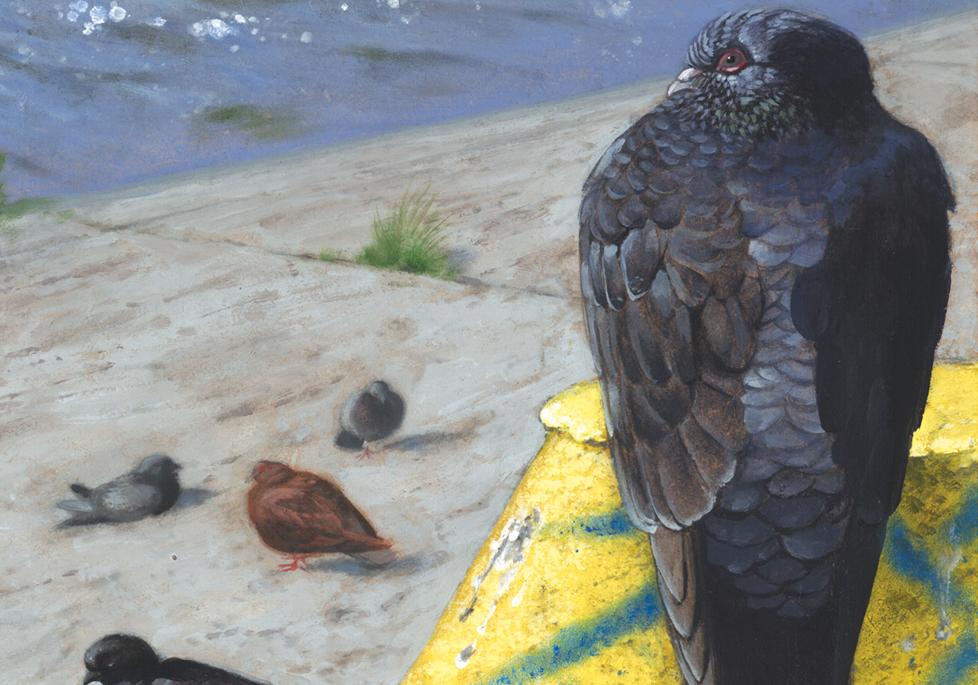 Pigeon Diagram . Detail. 2006 - acrylic on board. 2' x 1'.