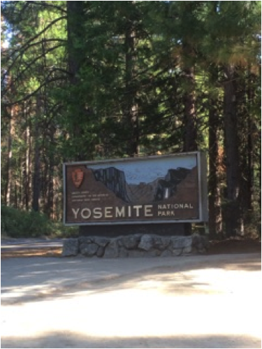 Yosemite National Park, one of four National Parks I visited during my travels. If you plan to check out these parks during your journey, it may be worth investing in a yearly pass!