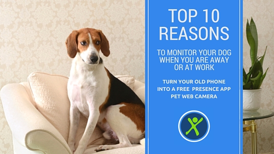 Top 10 Reasons to have a Presence Pet Camera