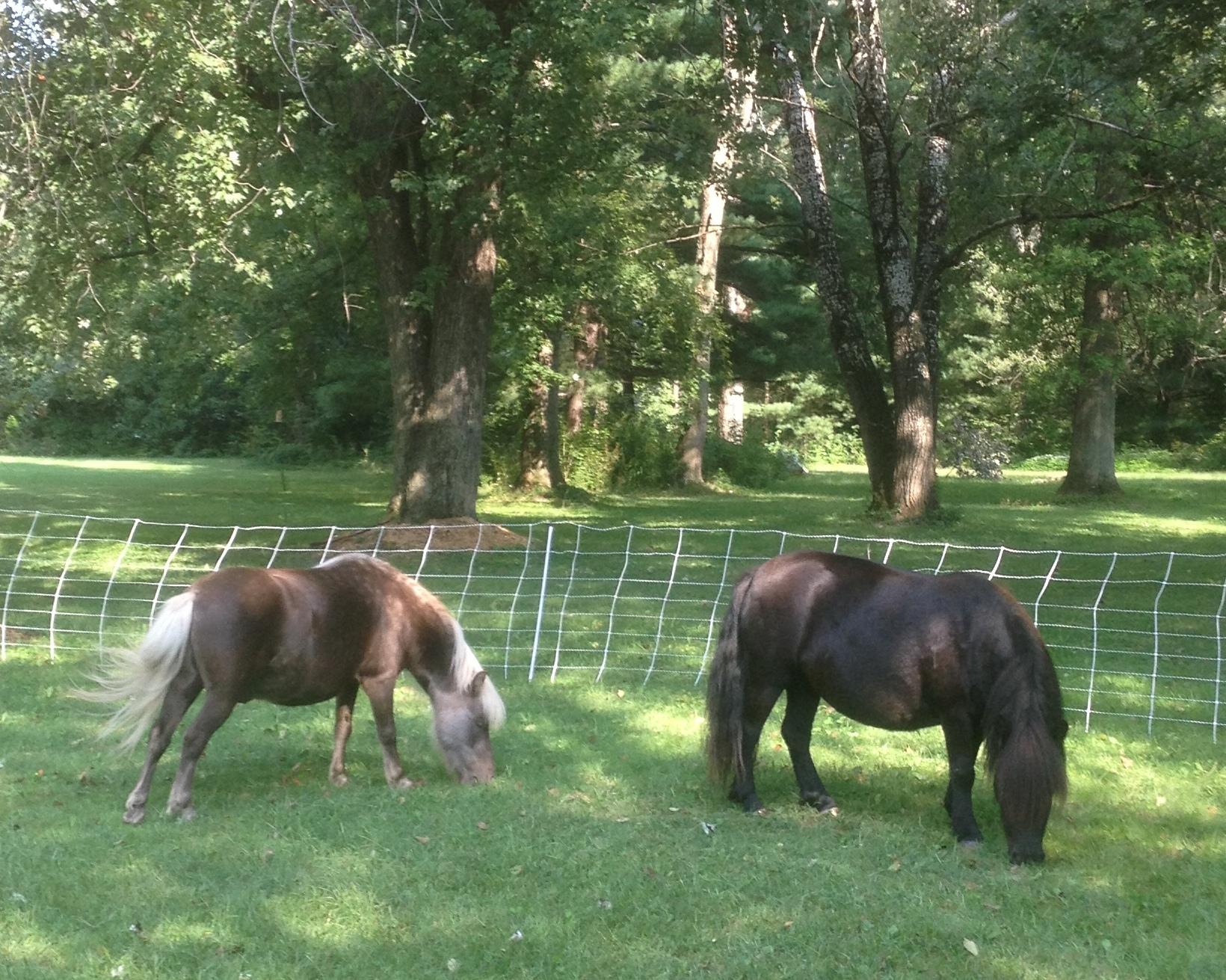 Ponies!.JPG