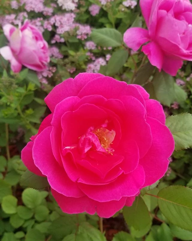 🌺 #justaddcolor #hotpinkflowers