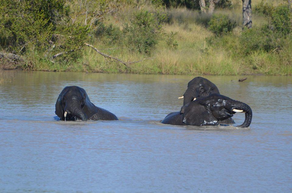 elephants bath.jpg
