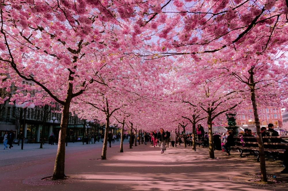 Beautiful-Spring-Alleys-1.jpg