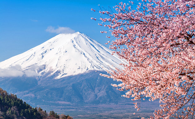 japan-mt-fuji-and-cherry-blossoms.jpg