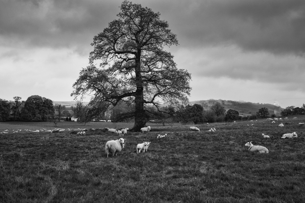 Idyllic Country Scene at the Brecon Beacons