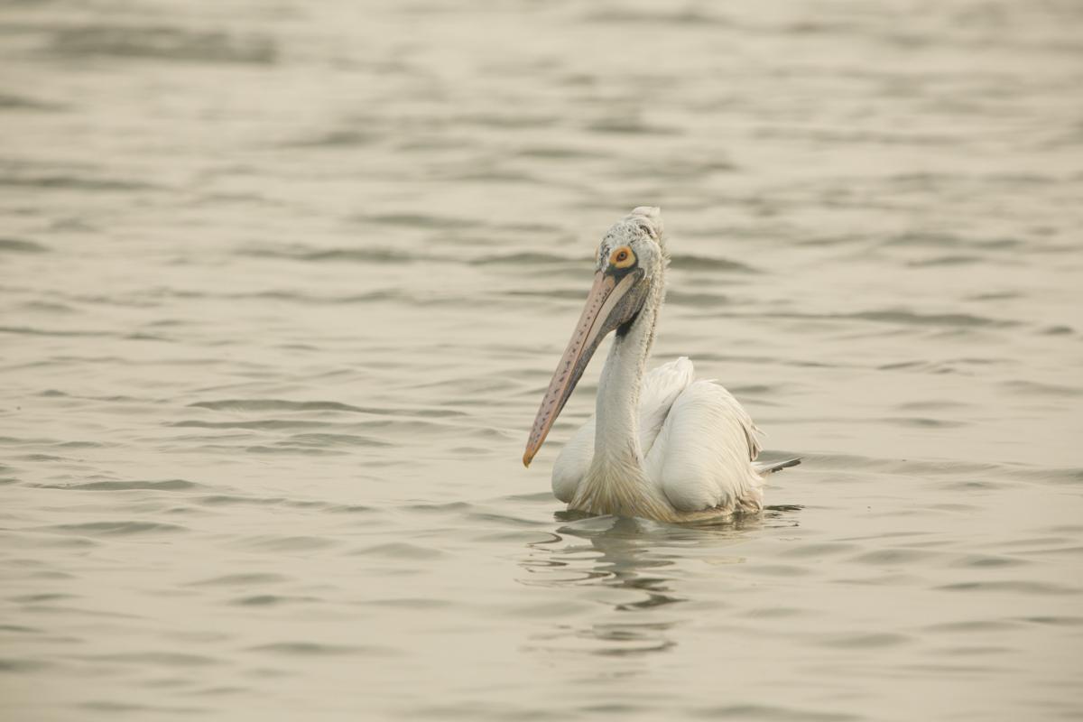 Kelambakam Birds-3771.jpg