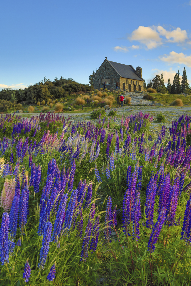 Church of the good Shepherd and Lupines