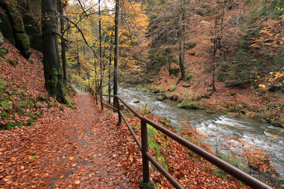 Walking Path at Bohemian Swiss international Park in Autumn