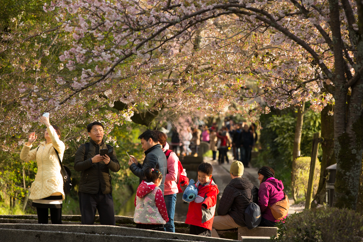 Tourists taking in the beauty of the Cherry blossoms along Philosophers path, Kyoto