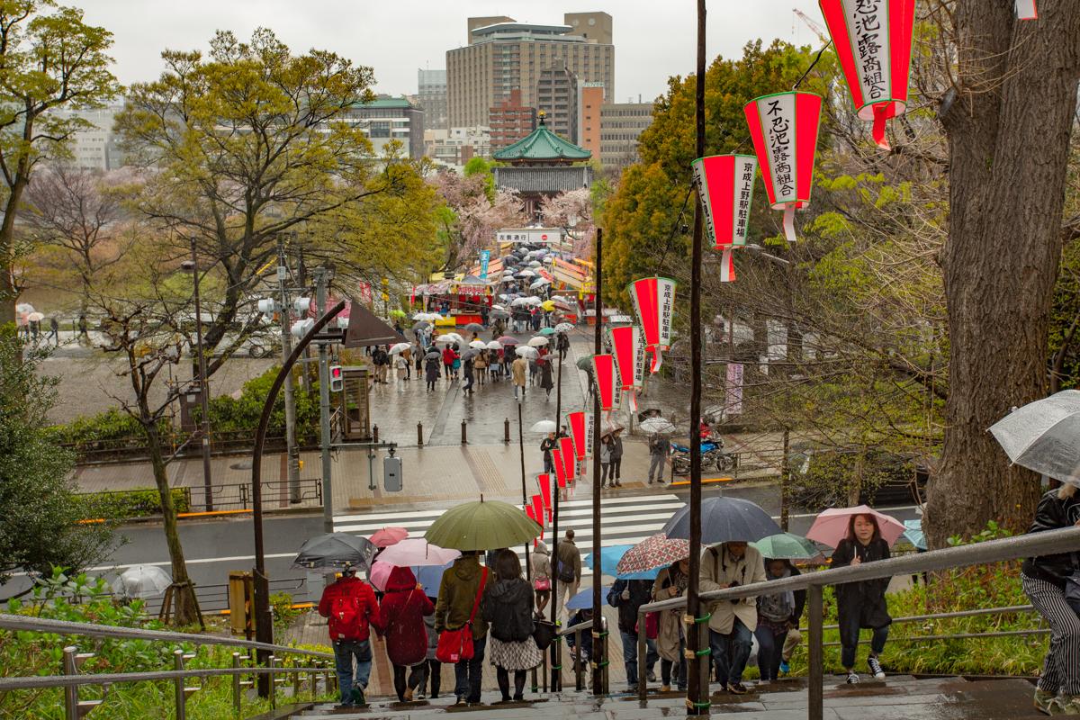 Sakura viewers at Ueno Park