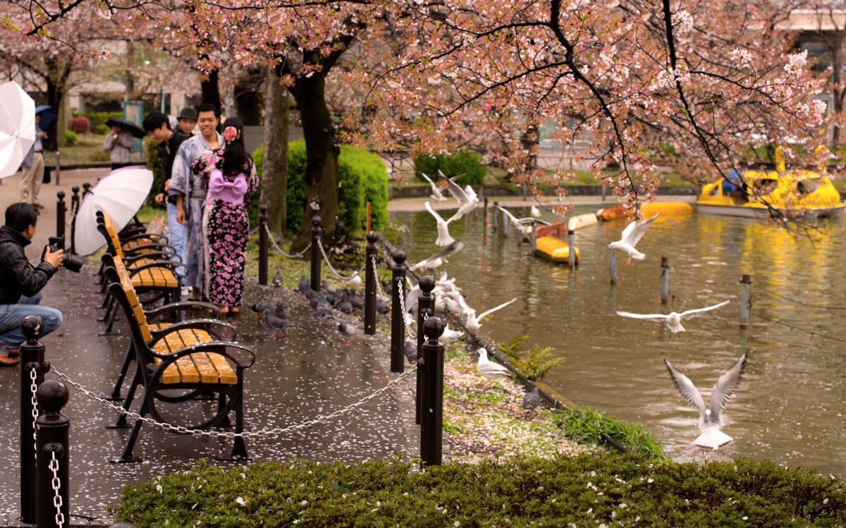 A wedding Photoshoot on at Ueno Park