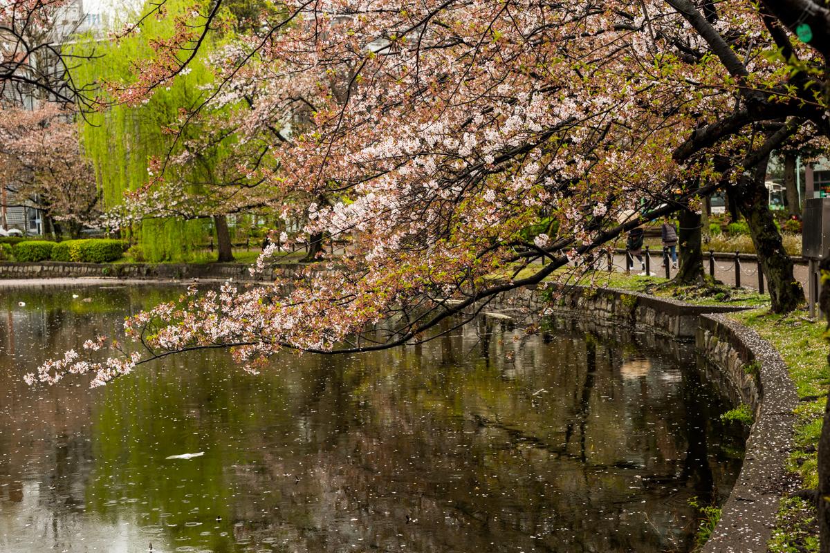 Ueno Park Scene