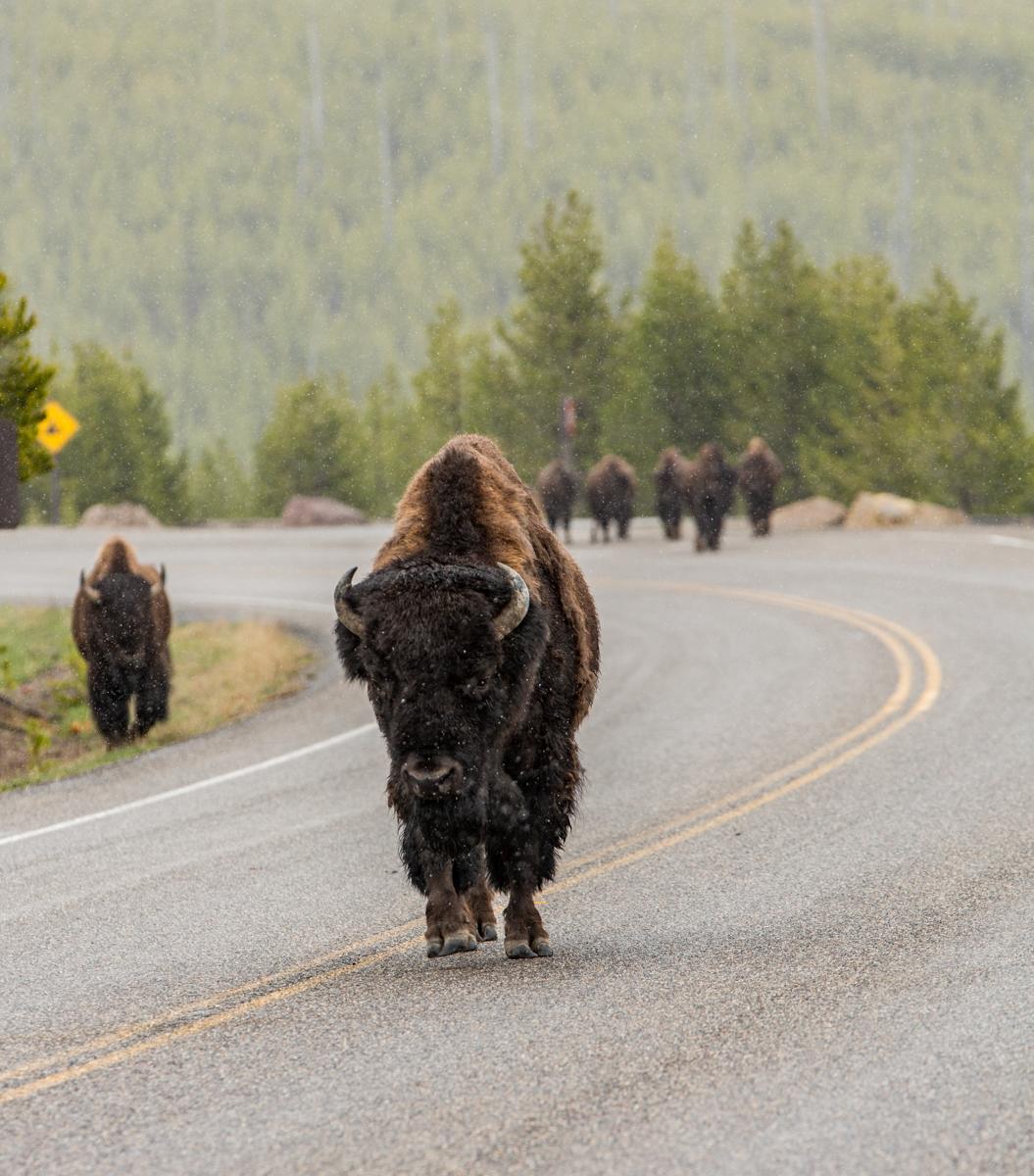 Yellowstone-3.jpg