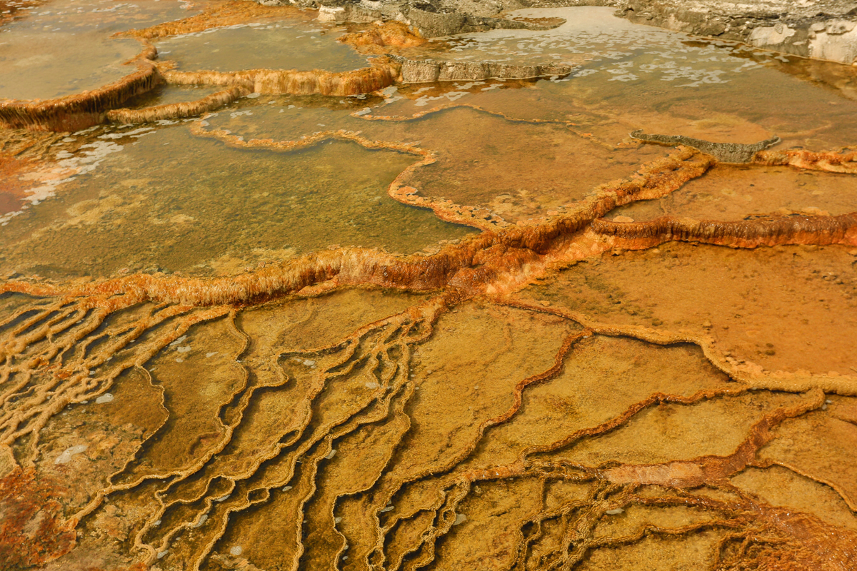 Patterns in the Geothermal waters of Mammoth Hot Springs