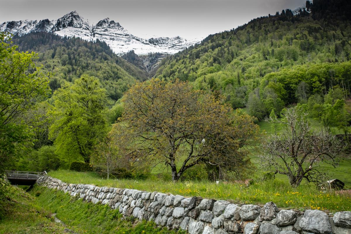 Landscape around Lake Brienz