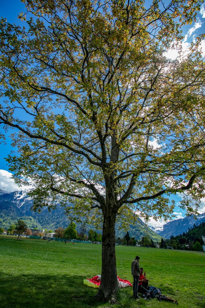 Paragliders taking break under a tree at Interlaken