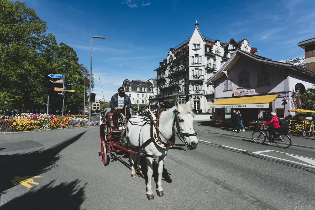 Charming Horse Carriage Rides at Interlaken