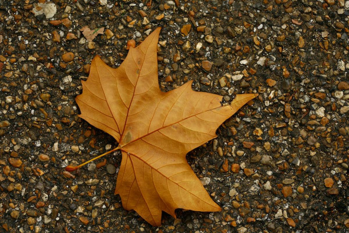 UK Autumn-10.jpg
