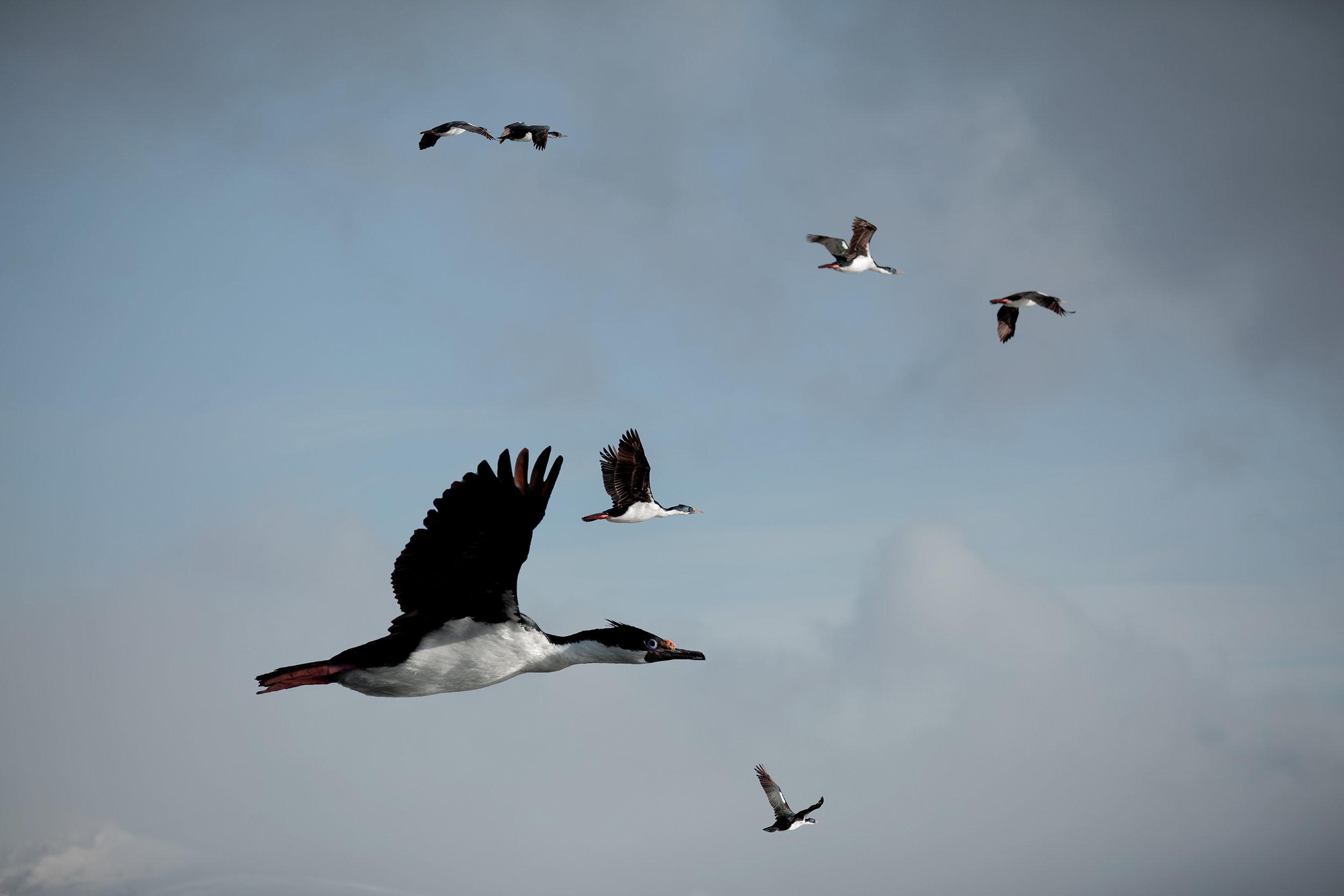 franmart.argentina.photography.wildlife.