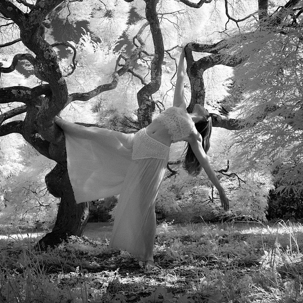 ap_dance forest.jpg