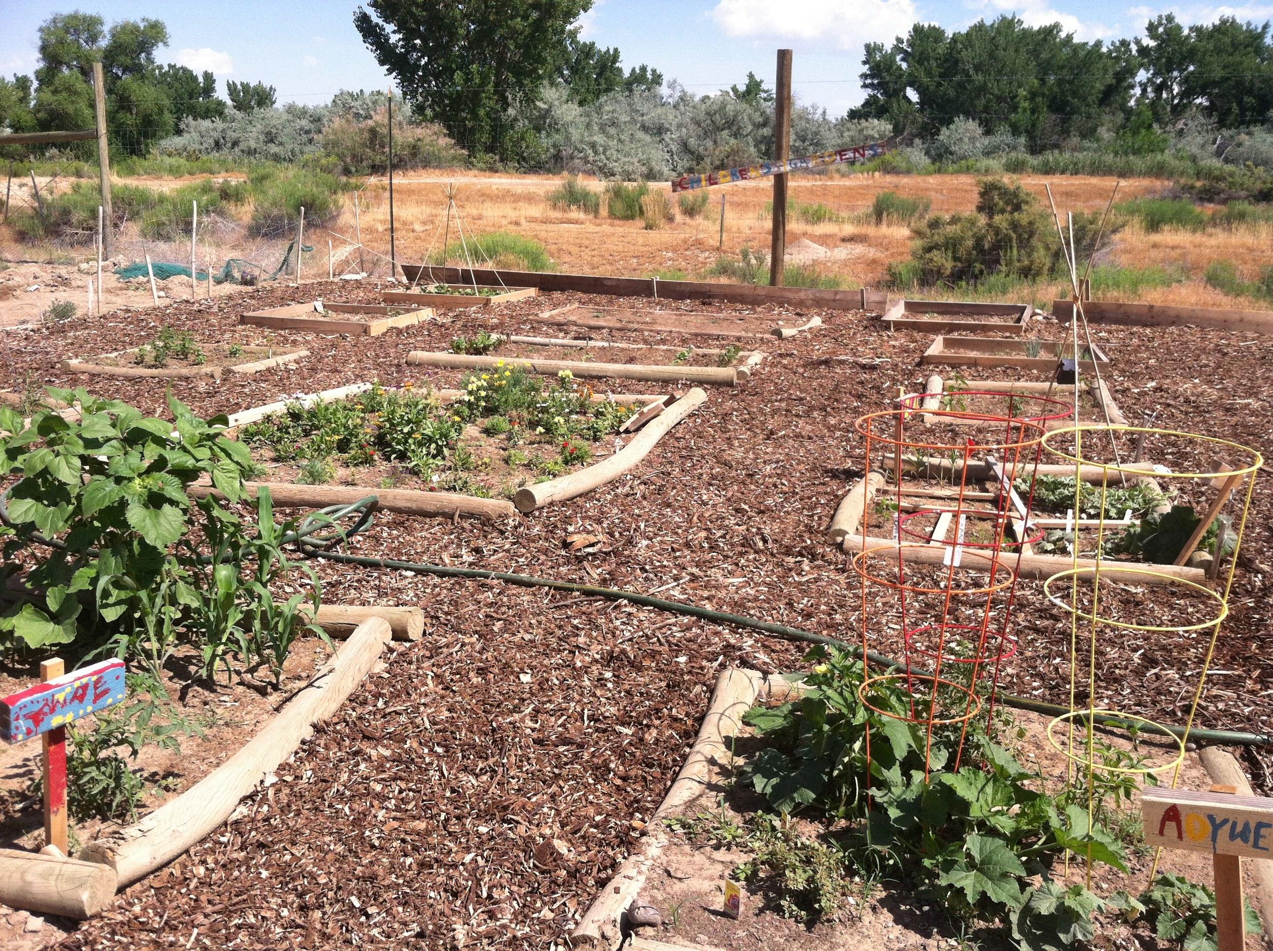 garden 2014-07-16 002.JPG