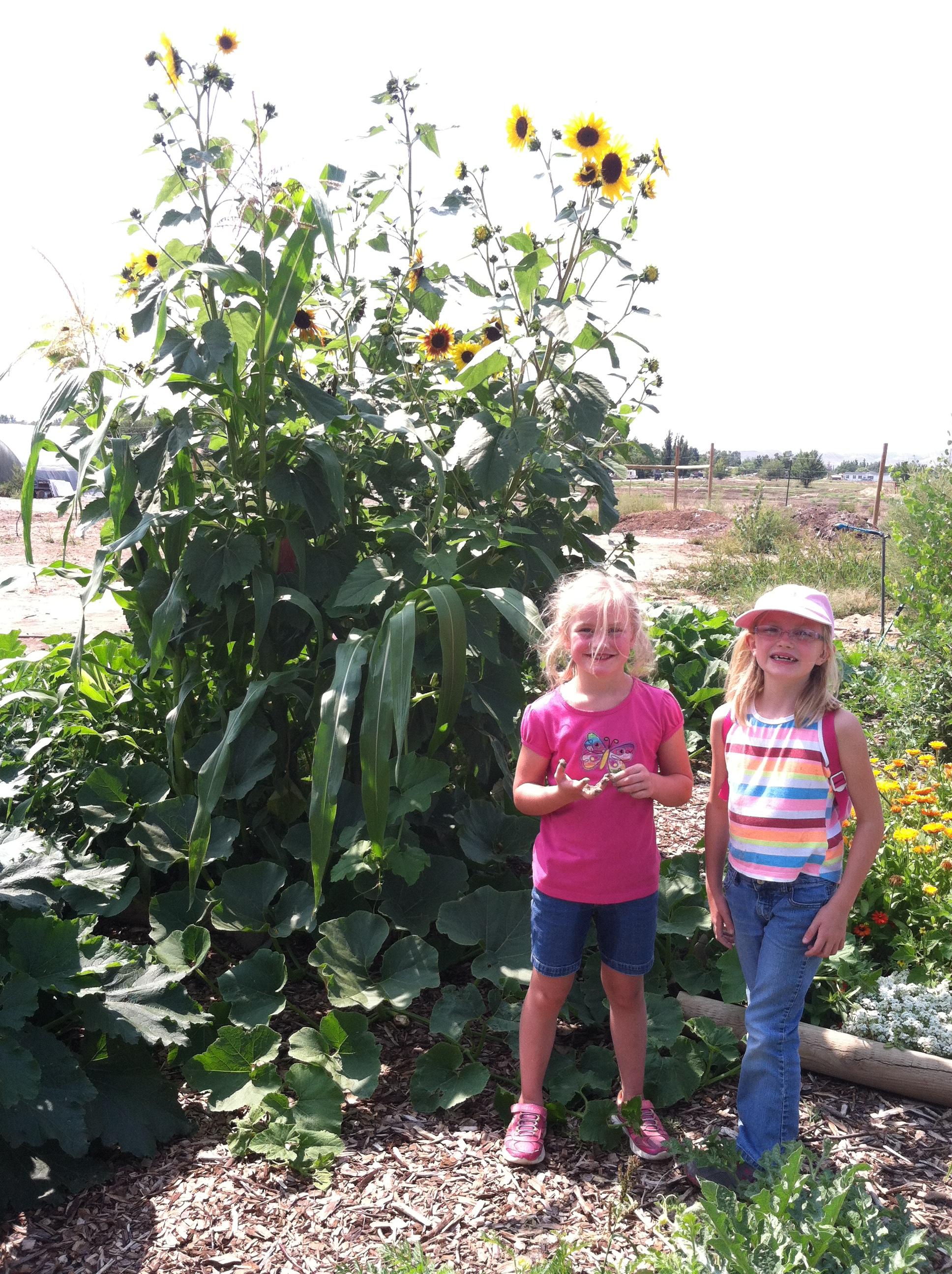 Garden 2014-08-29 002.JPG