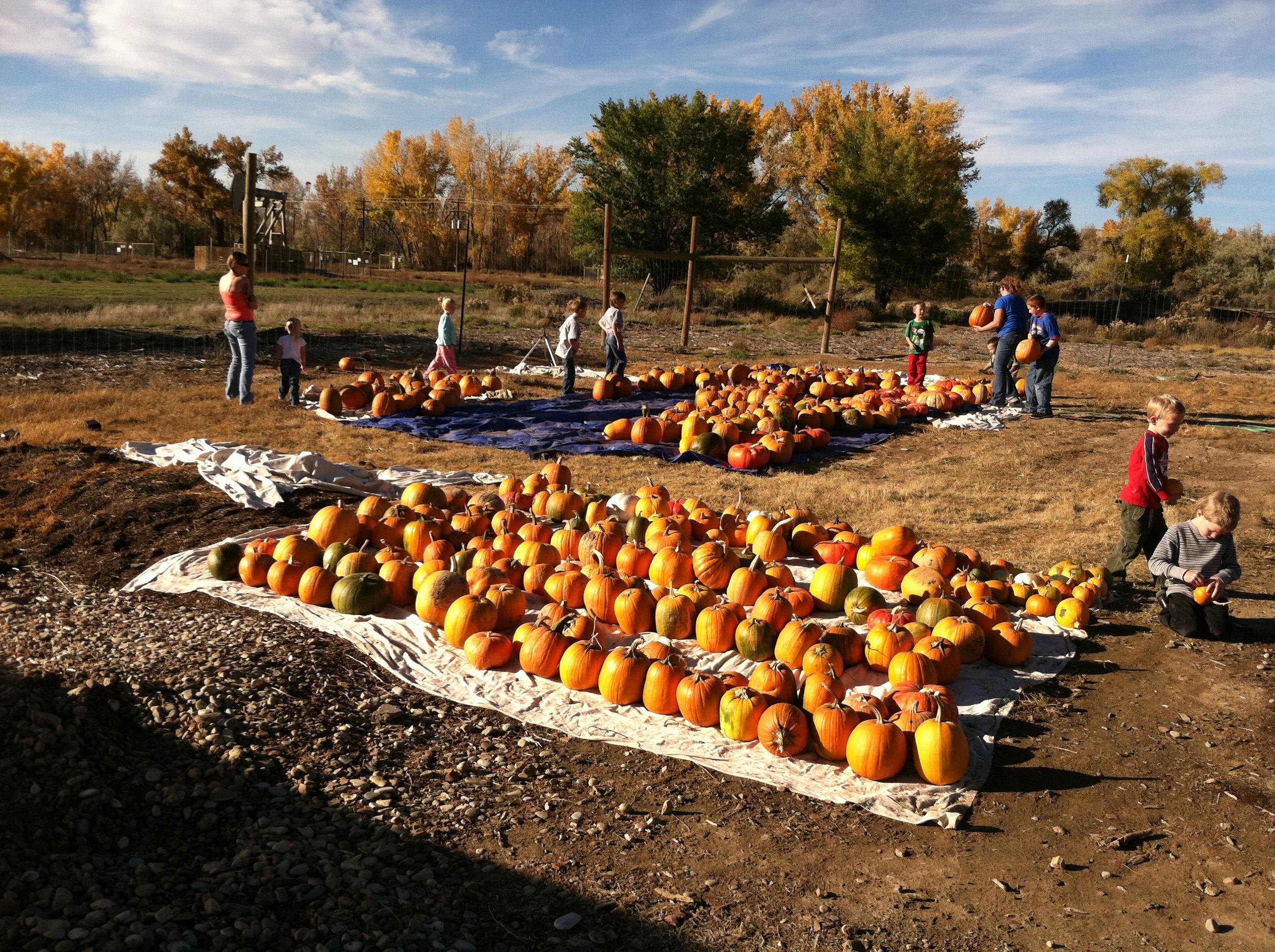 pumpkins 2014-10-23 001.JPG