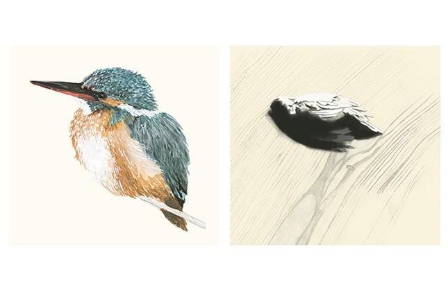 oiseaux retouch 2.jpg