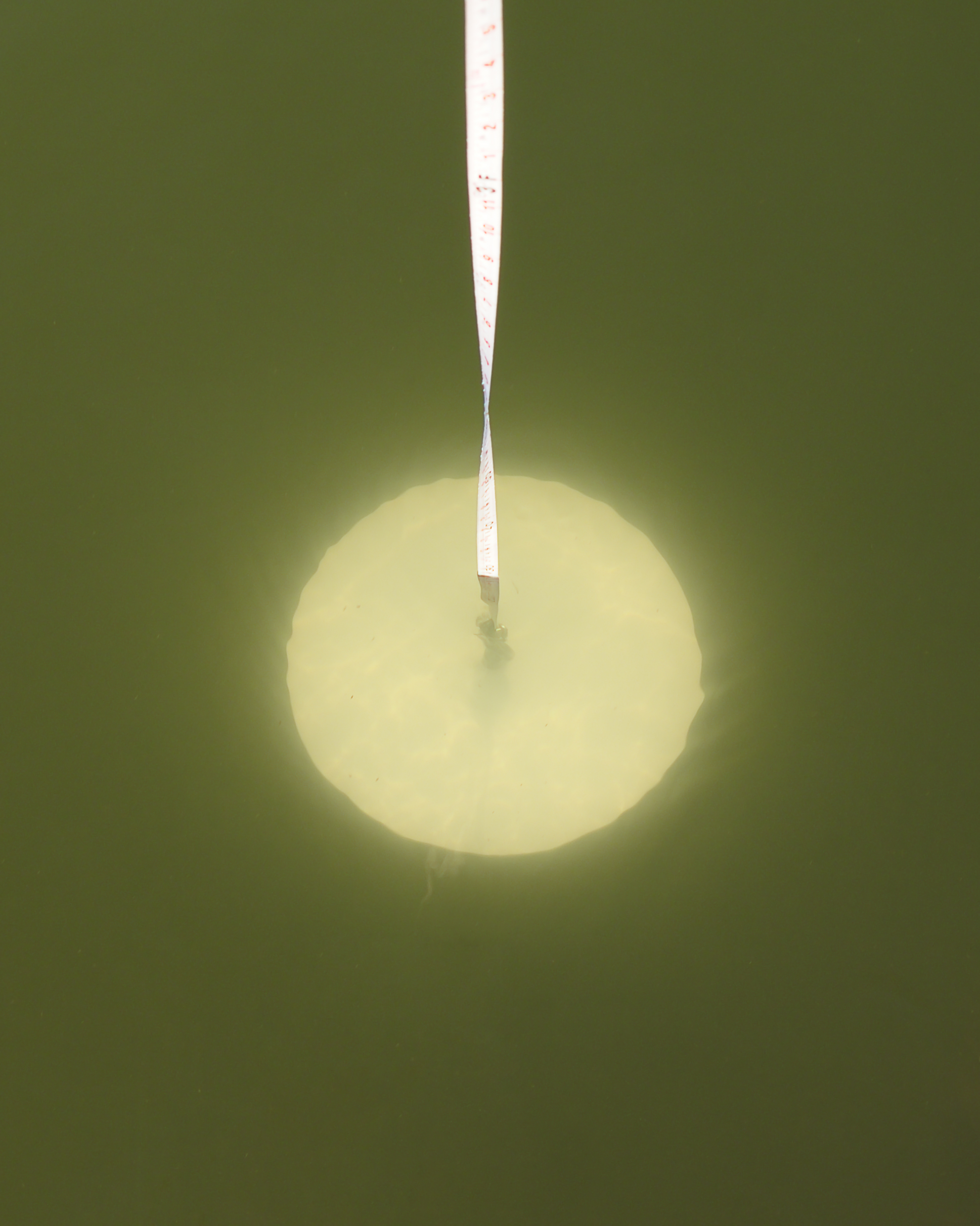 Secchi Disk Underwater.jpg