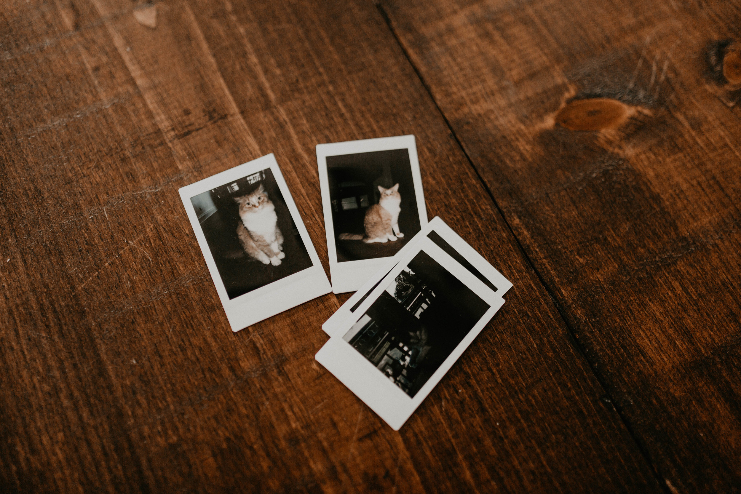 Andrew+Olivia72.jpg