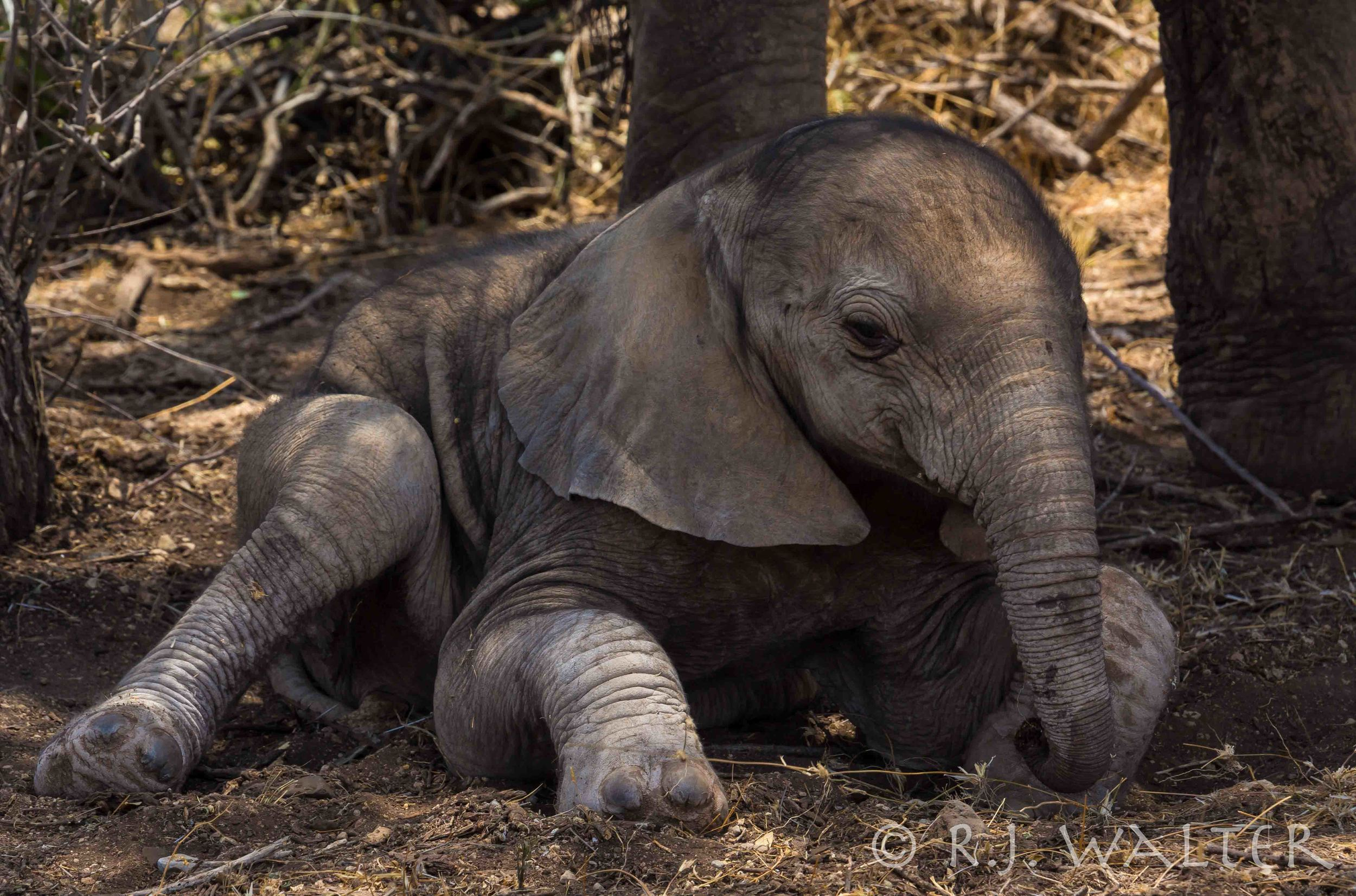 RJWalter_Save The Elephants_Samburu, Kenya_March 2015-2503.jpg