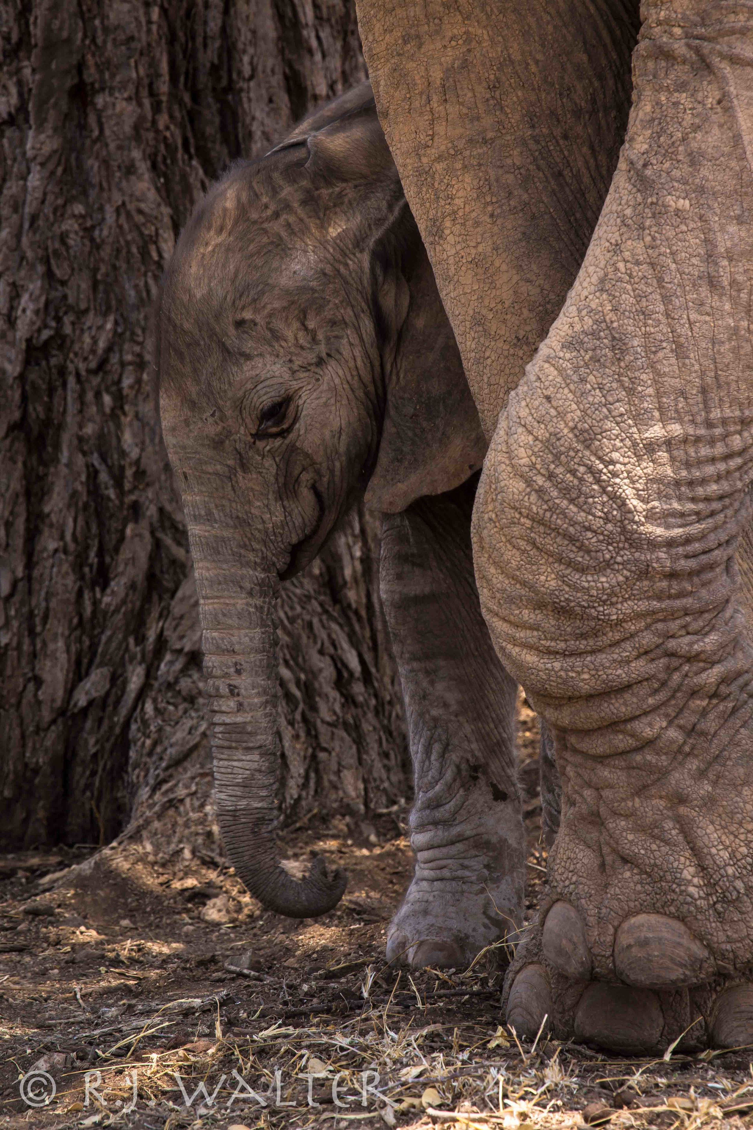 RJWalter_Save The Elephants_Samburu, Kenya_March 2015-2598.jpg