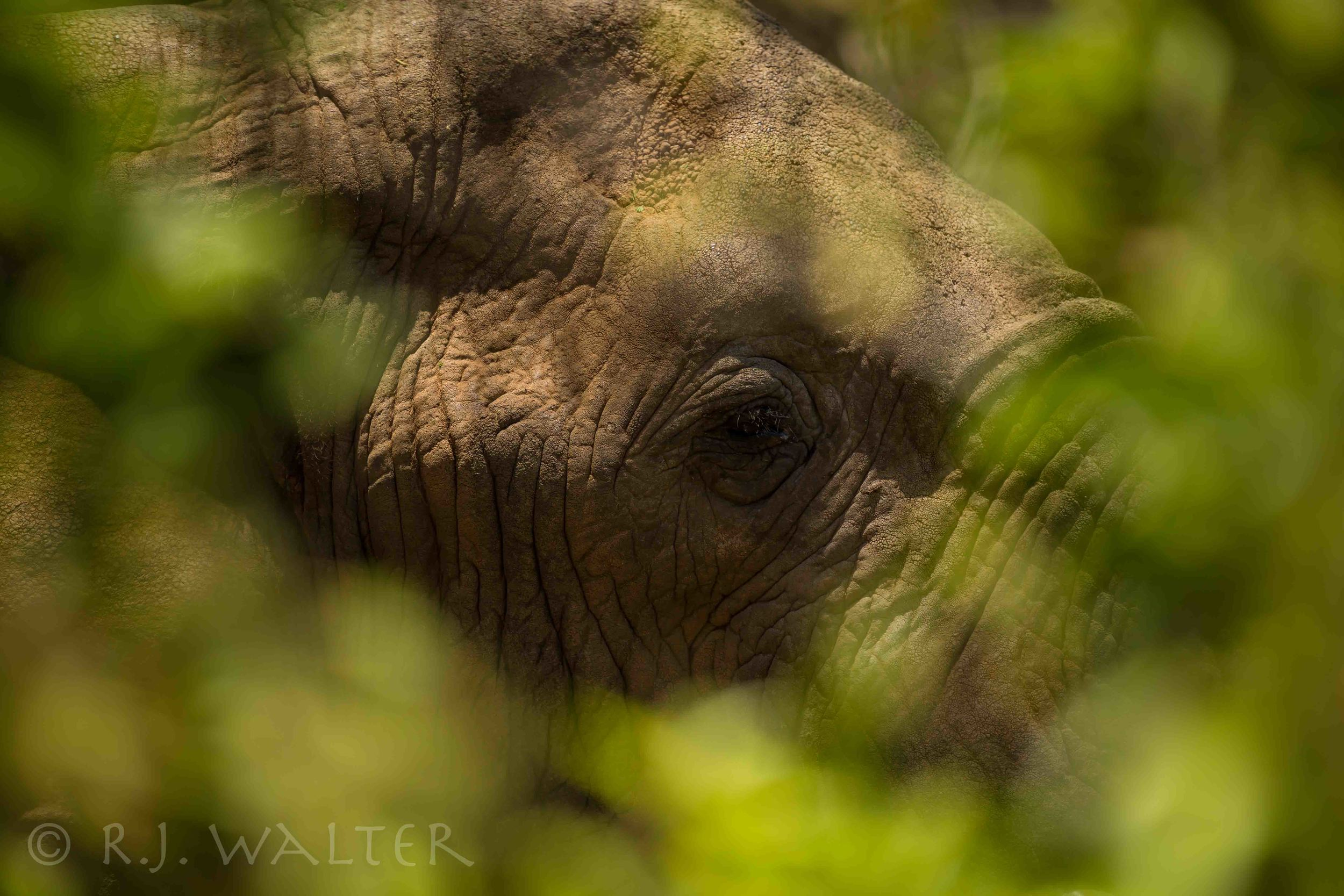 RJWalter_Save The Elephants_Samburu, Kenya_March 2015-5357.jpg